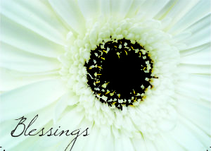 Blessings gerber daisy greeting cards
