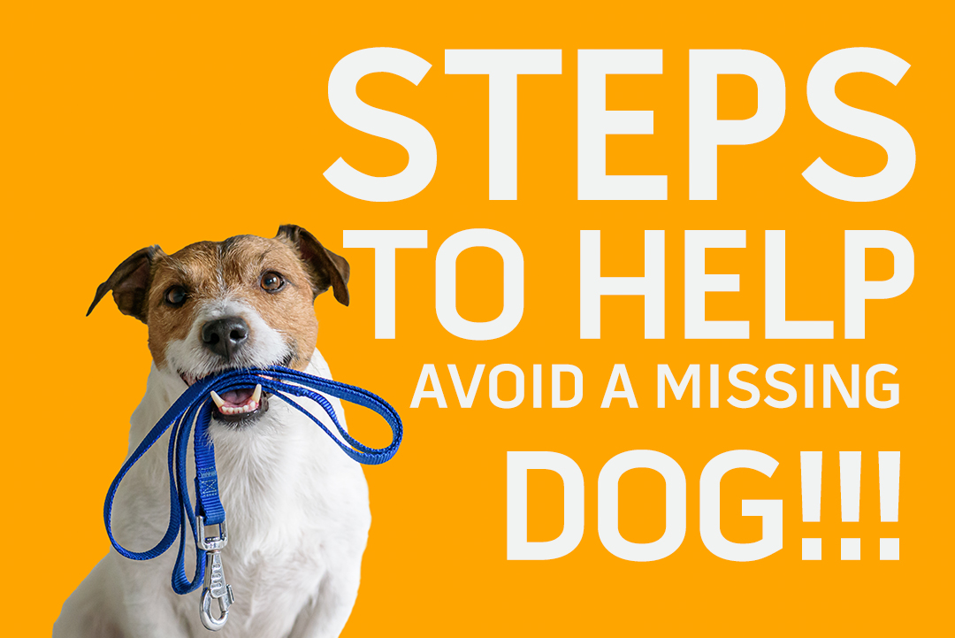 STEPS TO HELP AVOID A MISSING DOG